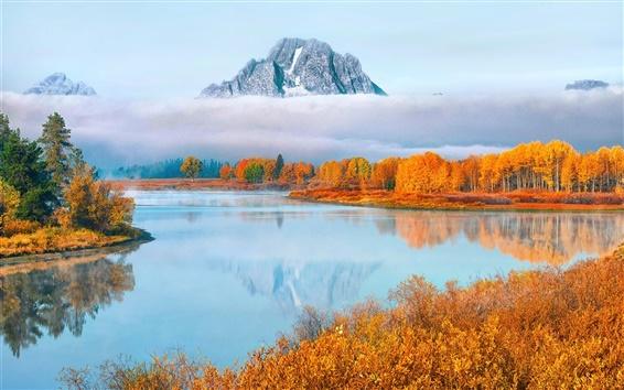 Обои США, штат Вайоминг, Гранд Тетон Национальный парк, деревья, туман, осень