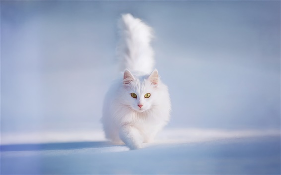 壁紙 ホワイトふわふわ猫、黄色の目、雪、冬