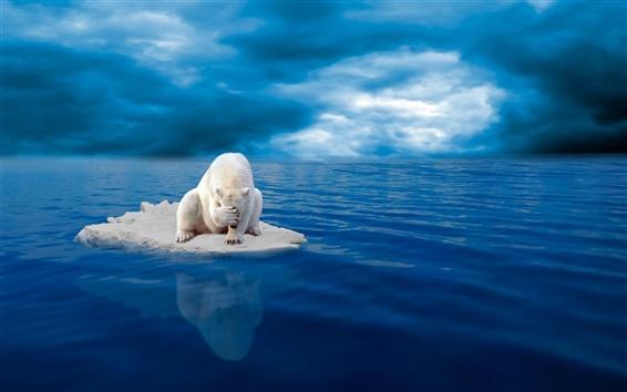 Обои Белый полярный медведь, лед, отчаяние, море, голубое