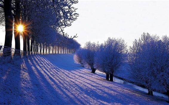 Обои Зима, деревья, снег, белый, солнечный свет