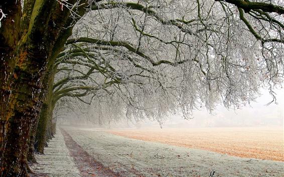Wallpaper Winter trees, white snow, ice, road, fields