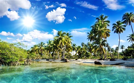 Wallpaper Beautiful scenery, tropics, beach, palm trees, sea, sunlight