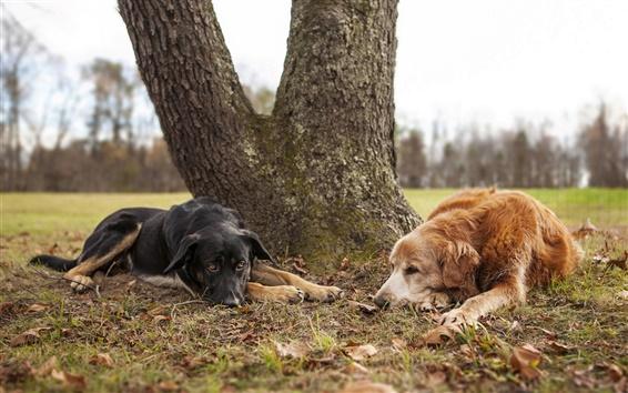 Wallpaper Brown dog, black dog