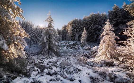 Wallpaper Bulgaria, forest, snow, sun, winter