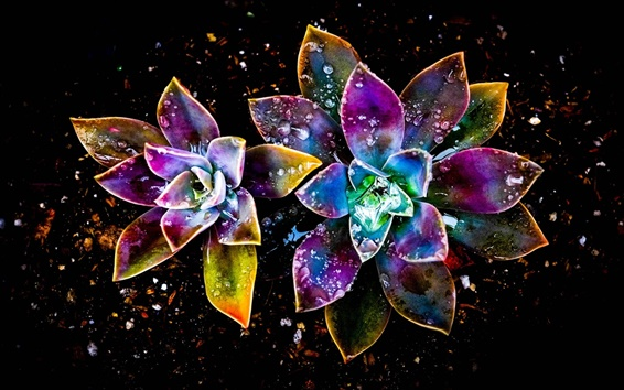 Wallpaper Colorful flowers, abstract, water drop