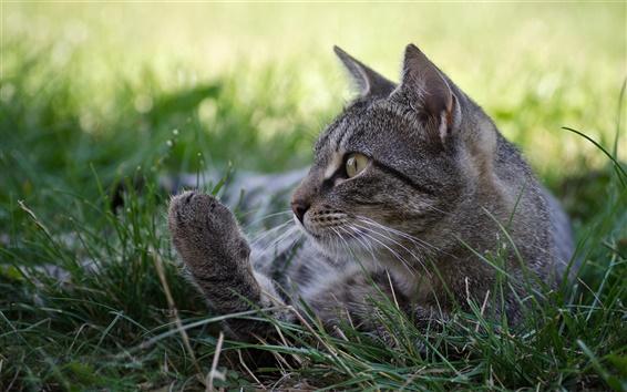 Обои Серый кот, сон, трава