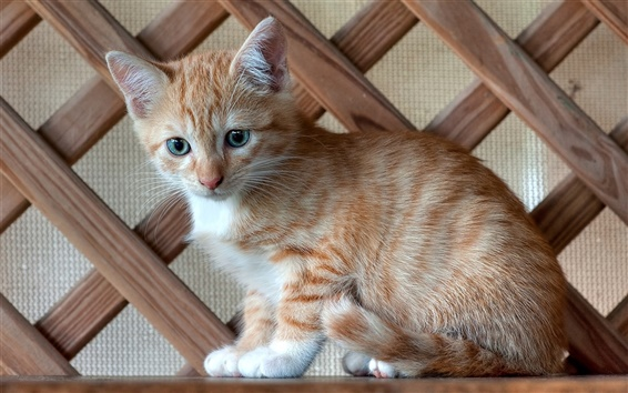 Papéis de Parede Vista lateral Kitten