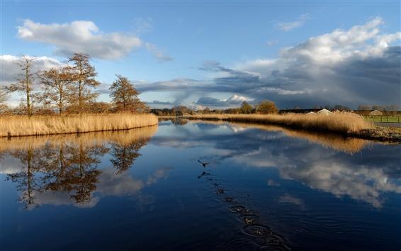 Обои Озеро, птица, трава, деревья, облака, осень