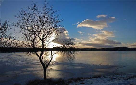 Wallpaper Lake, ice, winter, tree, sunset, dusk