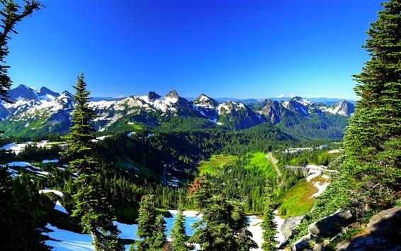 Wallpaper Mount Rainier, USA, spring, trees, mountains, snow