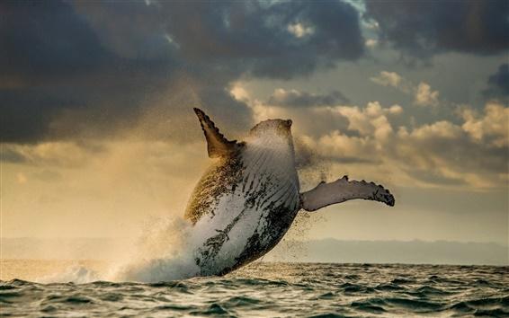セピア色の波とクジラ
