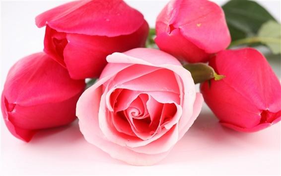 壁紙 ピンクと赤の花バラ