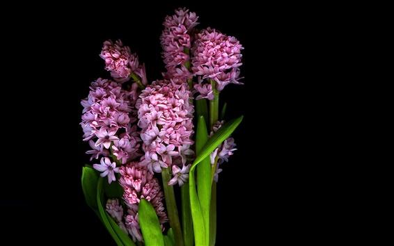 Wallpaper Pink flowers, petals, stem