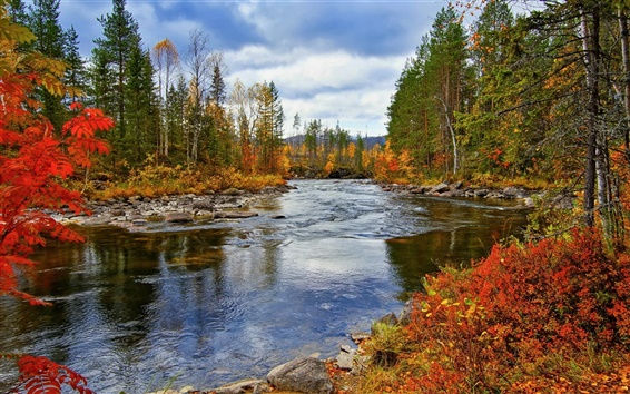 Wallpaper River, trees, autumn, nature scenery