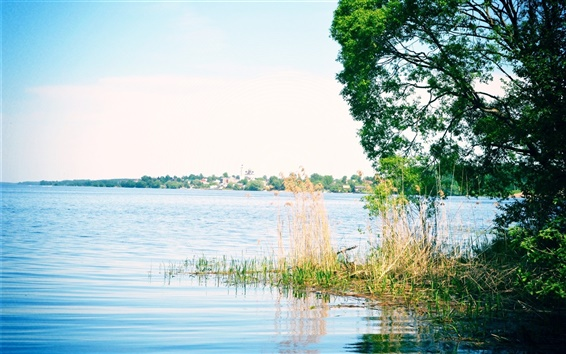 Wallpaper Russia, river Volga, grass, trees, glare