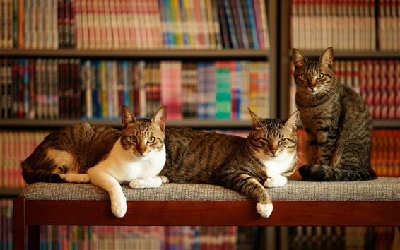 Fond d'écran Trois chats, salle