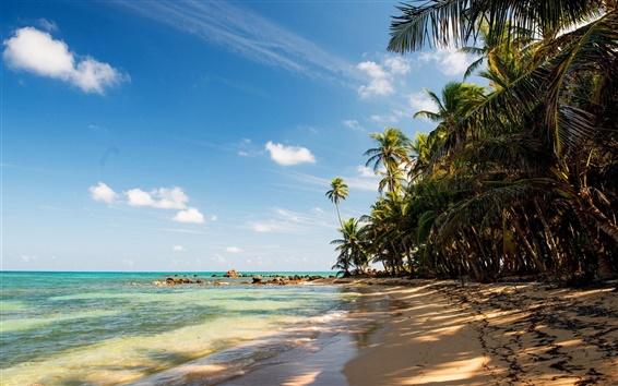Wallpaper Tropical, beach, sand, palm trees, rocks, sea
