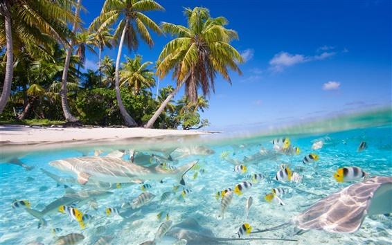 Fond d'écran Paysage tropical, mer, plage, palmiers, poissons, requins