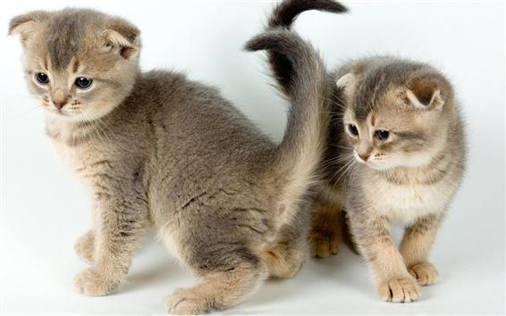 Wallpaper Two kittens, cute pet