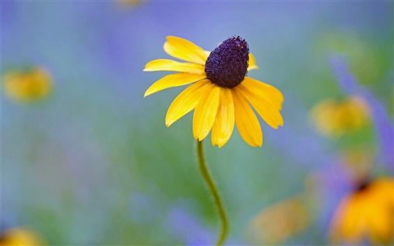 Обои Желтые цветы, Rudbeckia