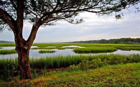 Wallpaper Amelia Island, Florida, USA, tree, grass, swamp
