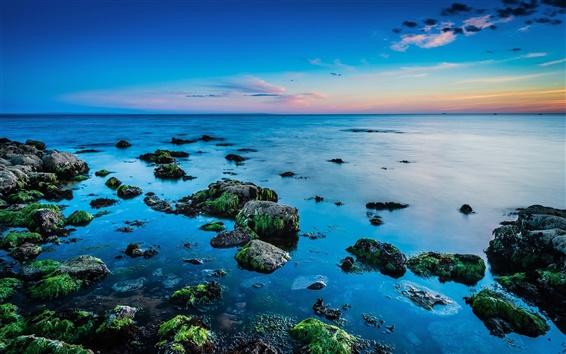 Wallpaper Beautiful coast, sea, rocks, algae, skyline, sunrise