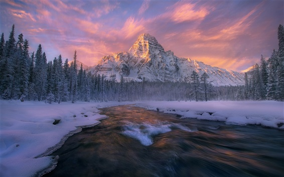 Wallpaper Canada, Alberta, Banff national Park, winter, forest, river, stream, snow