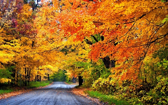 Fond d'écran Colorful automne, route, arbres, parc