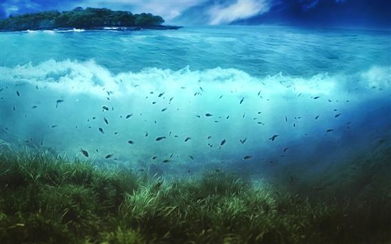 배경 화면 크리 에이 티브 사진, 섬, 나무, 물, 조류, 물고기