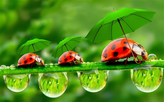 Wallpaper Creative pictures, water droplets, dew, ladybugs, umbrellas