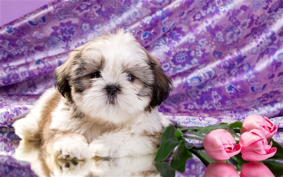 Wallpaper Cute puppy, tulip flowers