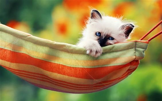 Обои Милый белый котенок, голубые глаза, гамак