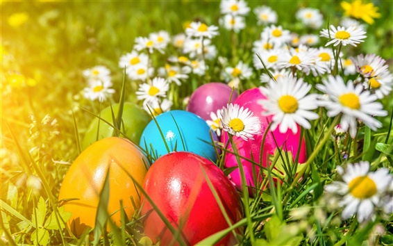 Wallpaper Easter, colorful eggs, flowers, daisies