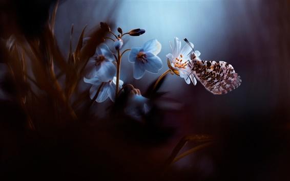 Wallpaper Flower, butterfly, dusk