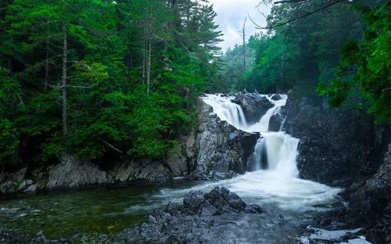 Wallpaper Forest, river, rocks, waterfalls, trees, dusk