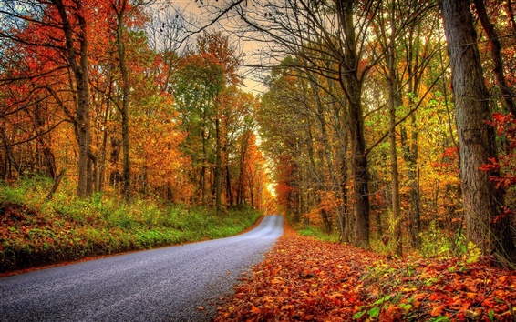 Wallpaper Forest, trees, leaves, colorful, road, autumn