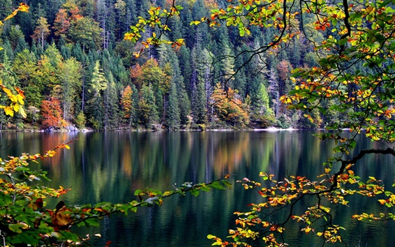 Wallpaper Forest, trees, river, autumn, leaves