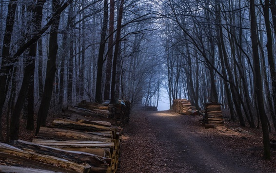 Wallpaper Forest, trees, road, firewood, autumn
