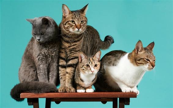 배경 화면 네 고양이, 책상, 녹색 배경