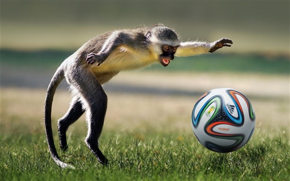 Wallpaper Monkey play football