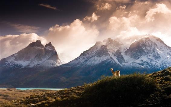 Обои Горы, облака, утро, трава, животные