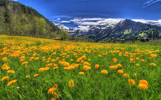 Wallpaper Mountains, flowers, clouds