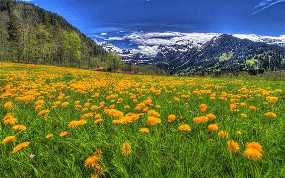 Papéis de Parede Montanhas, flores, nuvens