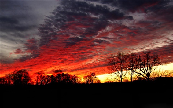 Fond d'écran Nuit, arbres, ciel, nuages, coucher de soleil, éclat, silhouette