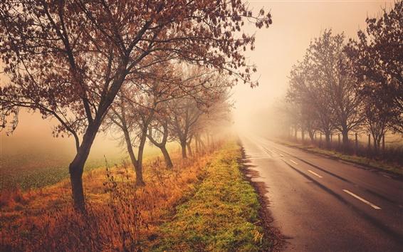 Wallpaper Road, trees, nature scenery, autumn, fog