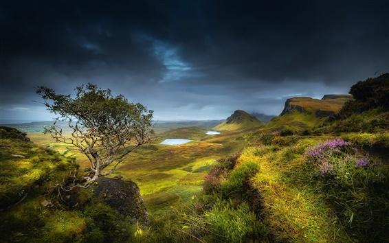 Papéis de Parede Escócia, região serrana, verão, montes, vale, grama, flores