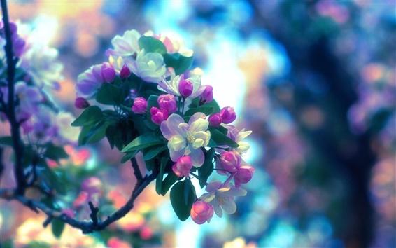 Обои Весна, яблони, цветы