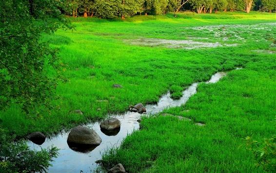 Wallpaper Spring, forest, grass, stream, rocks