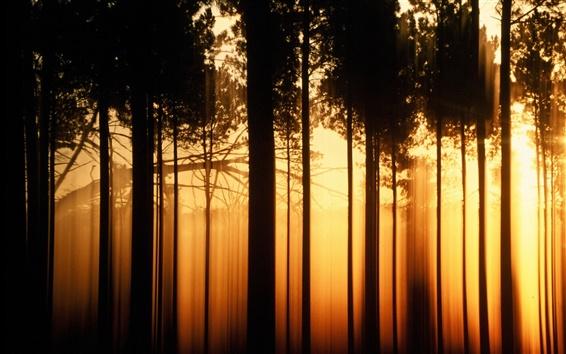 배경 화면 일몰 숲 나무, 검은 그림자, 따뜻한 오렌지