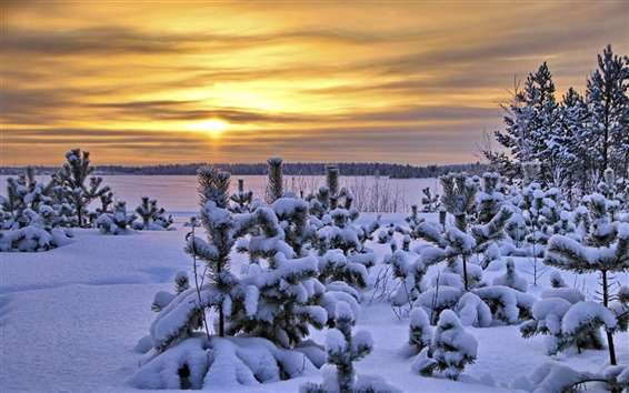 Wallpaper Sunset, winter, trees, thick snow